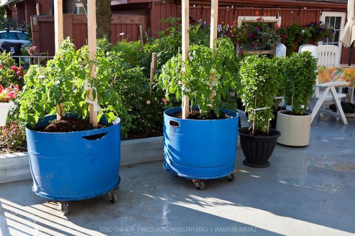 Запрещённые к выращиванию растения 68